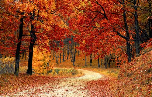 Trees in autumn with red foliage on a winding path