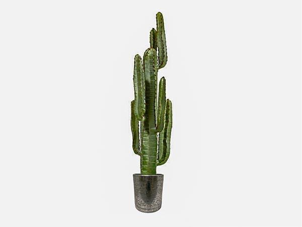 Rent the Cactus In Aluminium Planter