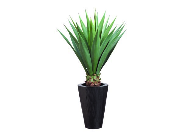 Rent the Sisal 4' Plant