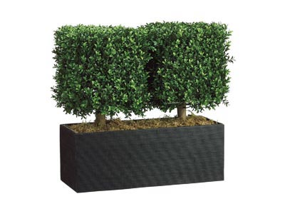 Rent the Boxwood Topiary