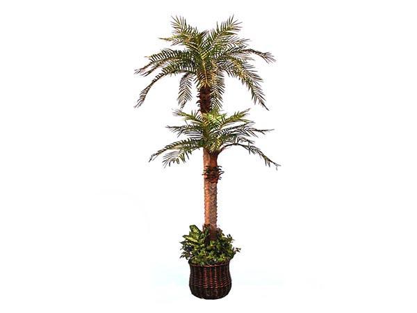 Rent the Phoenix Palm Tree