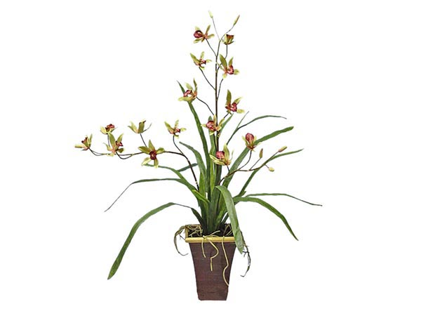 Rent the Orchid Plant