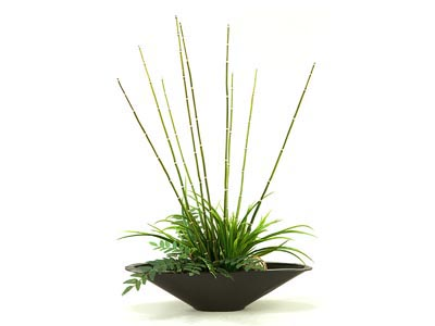 Rent the Bamboo and Greens Plant