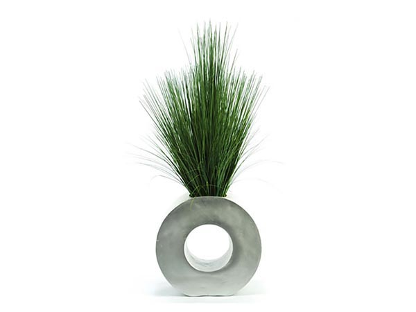 Rent the Contemporary Grasses Plant