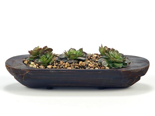 Rent the Succulents