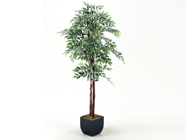 Rent the 6' Smilax Tree