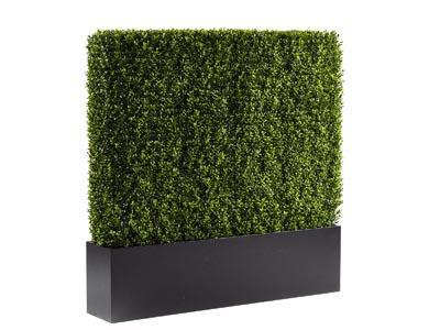 "Boxwood Hedge - 48"""
