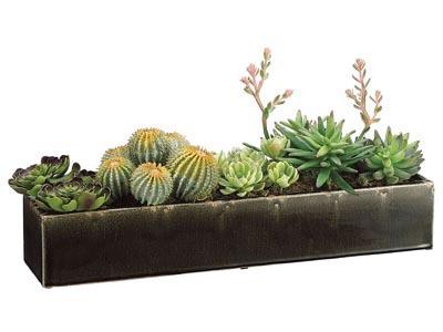 Rent the Long Succulent Arrangement