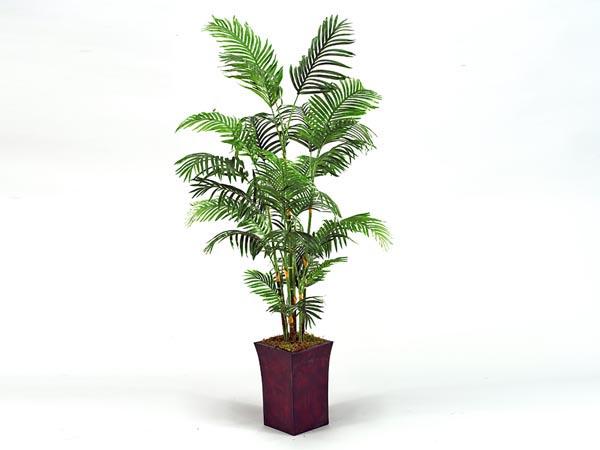 Rent the Palm Tree