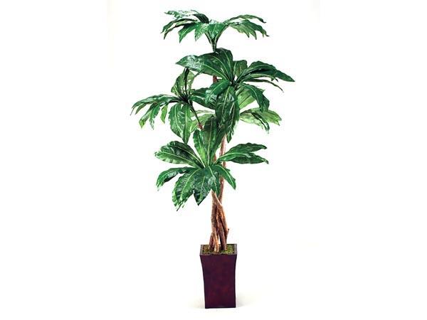 Rent the Silk Tree