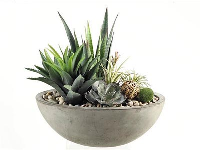 Rent the Mixed Succulents