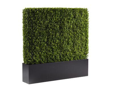 Rent the Boxwood Hedge